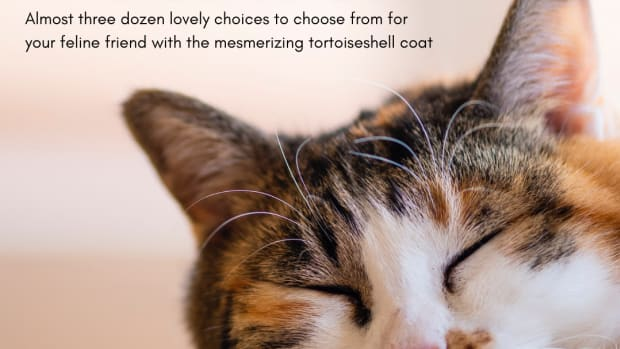 great-names-for-a-calico-cat