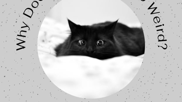the-odd-creatures-we-call-cats