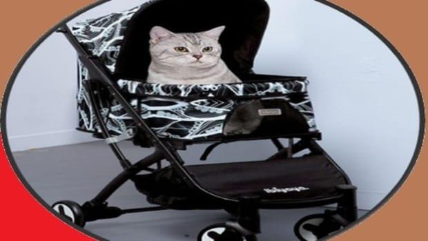 the-best-cat-stroller-reviews2020