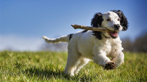 a-practical-guide-on-training-your-dog-to-fetch-at-your-command