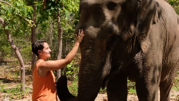 visiting-phnom-tamao-wildlife-rescue-center-cambodia