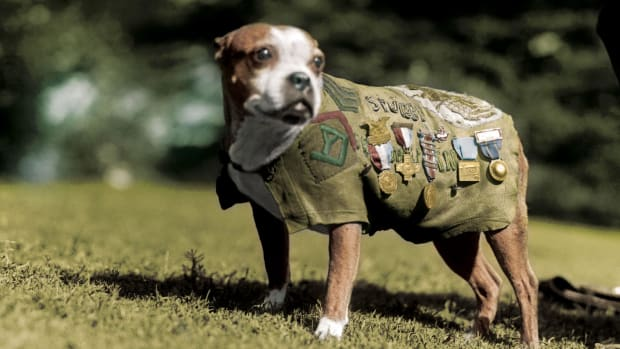 the-true-story-of-world-war-i-canine-hero-sergeant-stubby