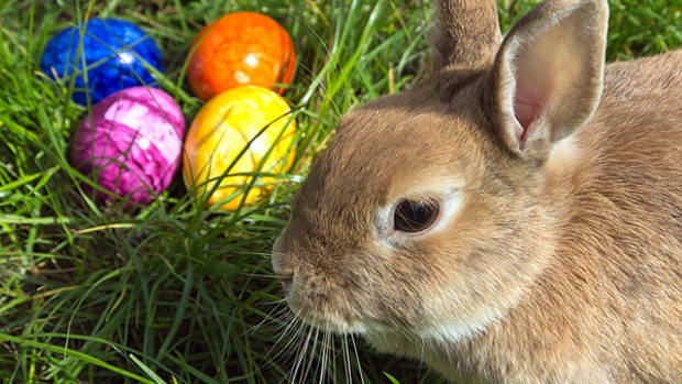 easter-bunny-and-colored-eggs-traditions-and-origins
