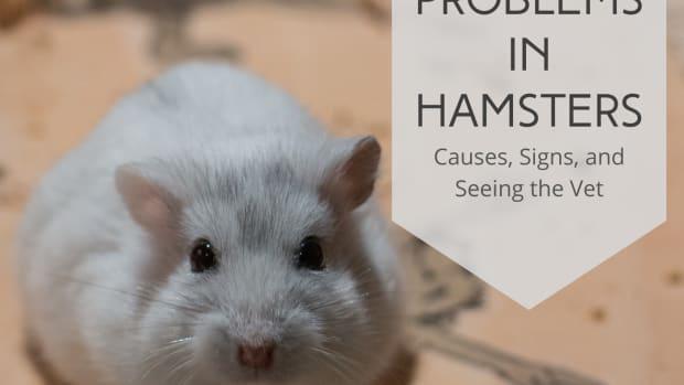 upper-respiratory-illness-hamsters