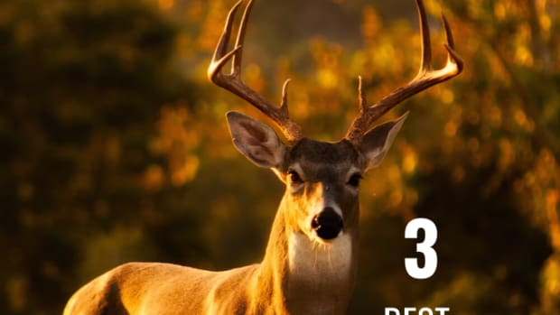 best-3-deer-rifle-scopes-for-the-cheap-hunter