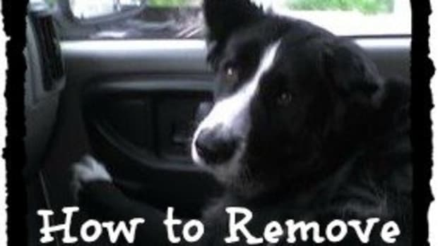 how-to-get-skunk-smell-out-of-your-dog