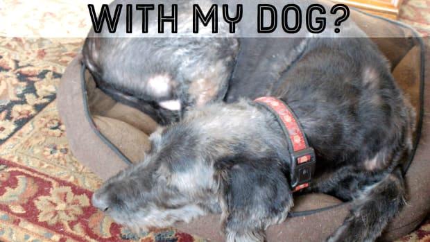 do-you-sleep-with-a-dog