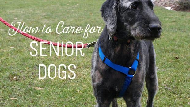 older-dogs