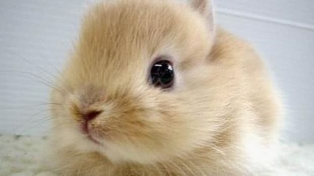 rabbit-names-how-to-pick-a-name-for-your-bunny