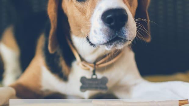 puppy-temperament-tests