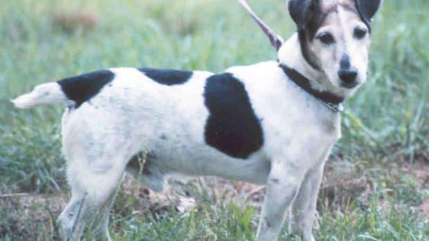 Barnie, my Jack Russeell Terrier