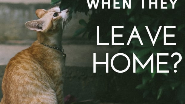 where-do-your-cats-go-when-they-leave-your-house