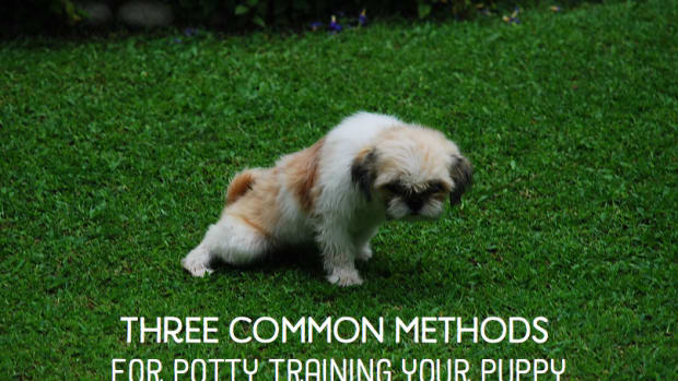 how-to-potty-train-a-puppy_