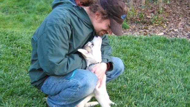 an-ear-for-an-ear-why-biting-your-dogs-ear-does-not-work-aversive-techniques-forceful-punishment-do-not-work
