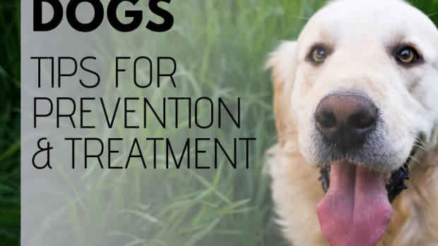 dog-intestinal-worms