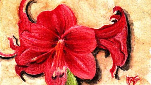 "Amaryllis, 4"" x 6"" in Derwent Inktense on cold press watercolor paper, by Robert A. Sloan"