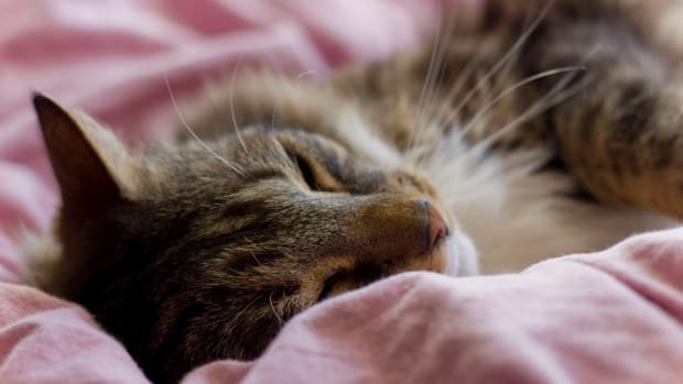 twelve-warning-signs-of-feline-cancer-every-cat-owner-should-know