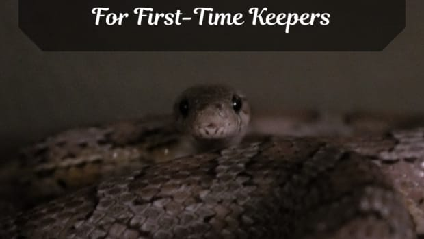 choosing-your-first-pet-snake