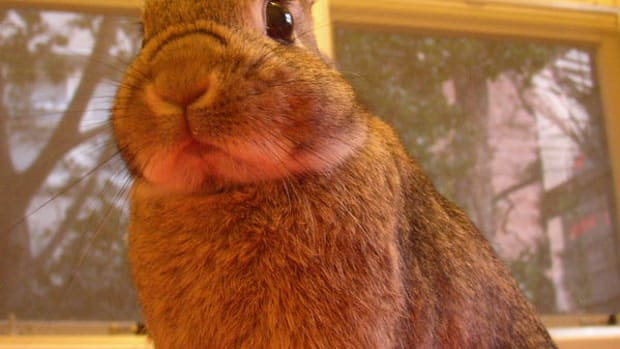 how-to-help-pet-rabbits-adjust-to-a-new-environment