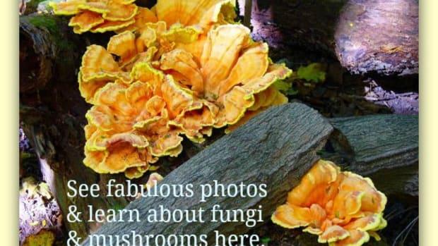 pictures-mushroom-fungi-wild-ones