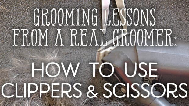 grooming-lessons-from-a-real-groomer-lesson-2