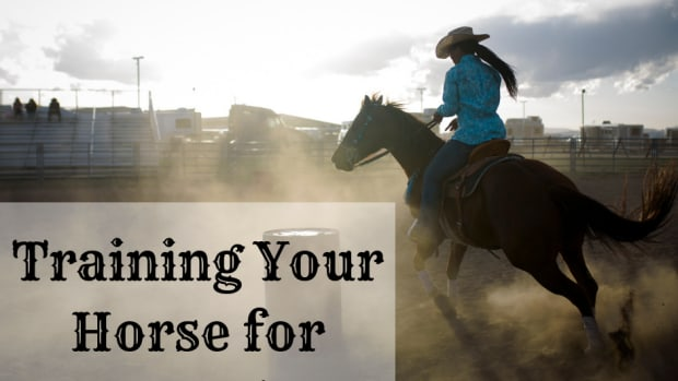 how-to-train-for-barrel-racing