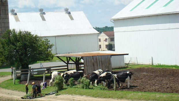 An Amish farm along the Strasburg Railroad line in Lancaster County. (Photos this page public domain)