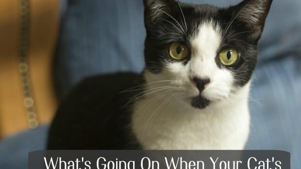 cat-eye-problems-why-the-cloudy-eye