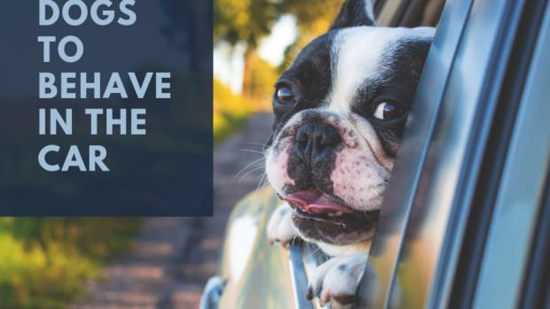how-to-get-your-dog-to-behave-in-the-car