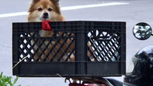 canine-humor-the-dog-in-a-basket-poem