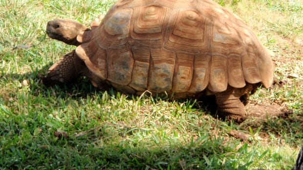 what-to-do-when-your-turtle-runs-away-from-home