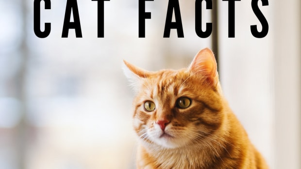 cat-behavior-interesting-facts-about-your-cat