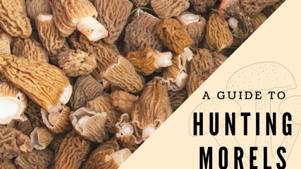 hunting-southern-oregon-morels