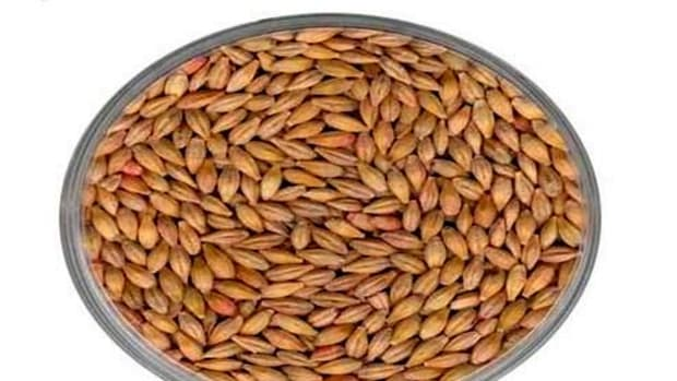 barley-grains-health-benefits-uses-recipes