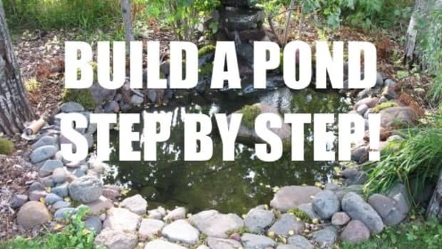 how-to-design-and-build-a-pond