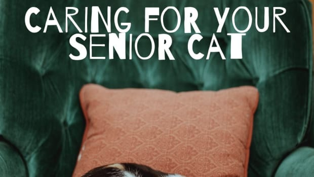 older-cats-have-special-needs