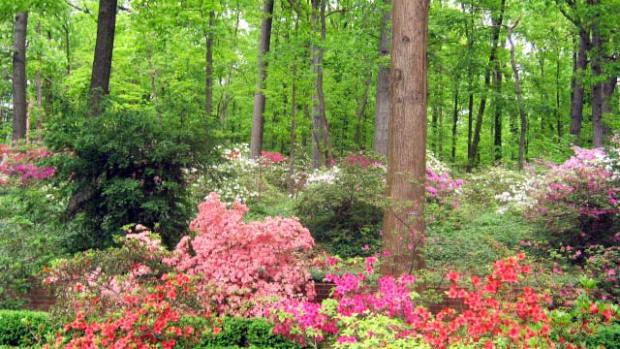 shadelovingfloweringplantsforawoodlandgardenorshadyarea
