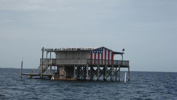 Cormorants enjoy fishing the Florida flats, too!