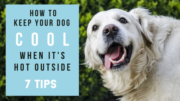 how-to-keep-dogs-cool-in-summer