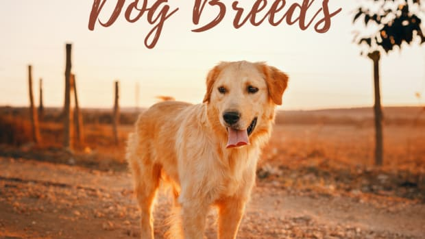 top-10-dog-breeds-for-families