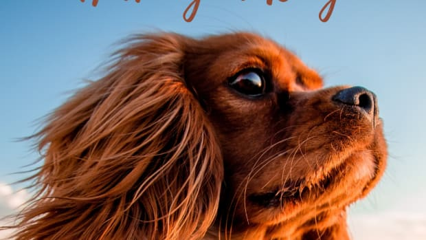 the-advantages-and-disadvantages-of-having-a-dog