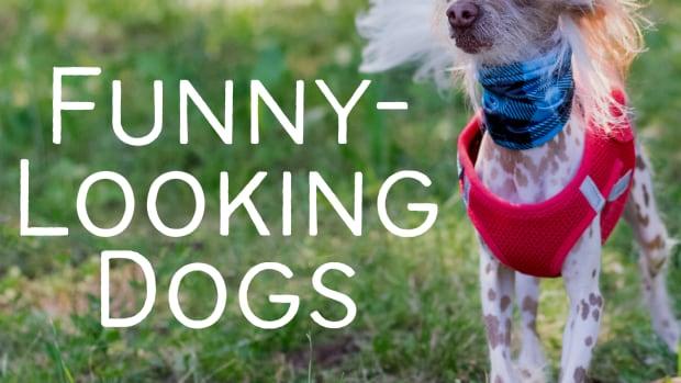 7-worlds-weirdest-looking-dog-breeds