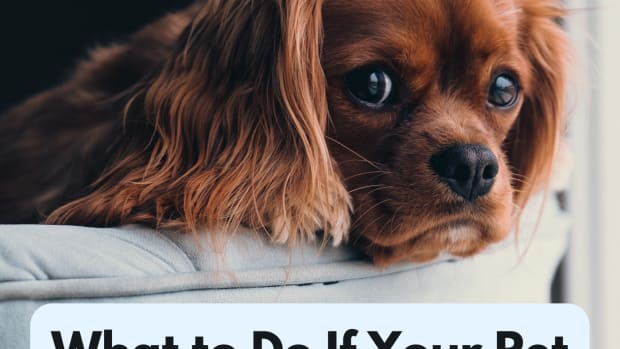 what-to-do-if-your-pet-ingests-moth-balls