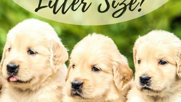 dog-litter-size-determination