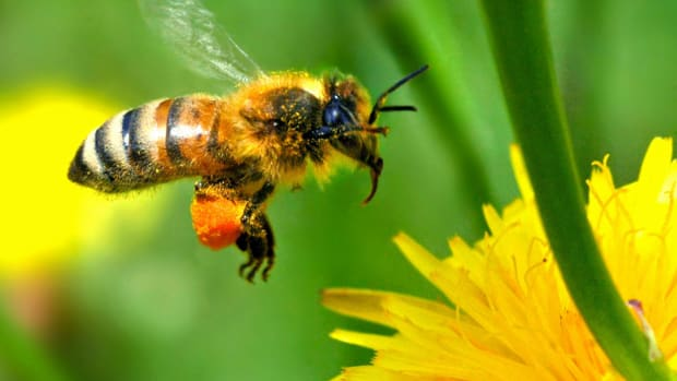 benefits-of-natural-honey-enterprise-beekeeping-for-profitable-and-diversified-farming