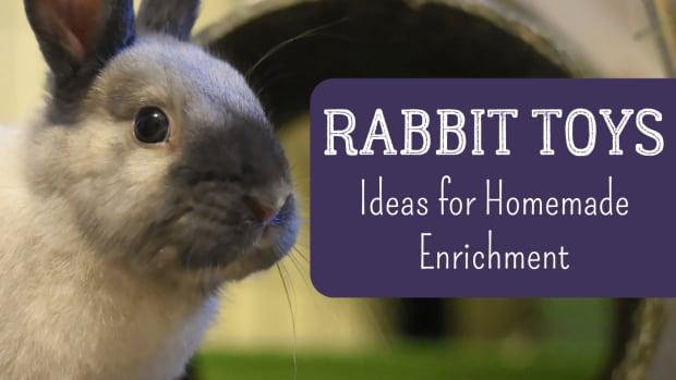 homemade_rabbit_toys-2