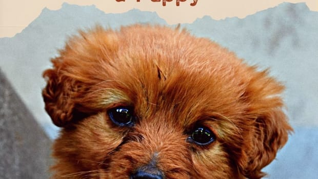 checklist-for-adding-a-new-puppy-to-your-family