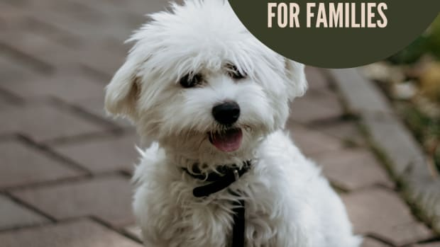 small-dog-breeds-good-with-families