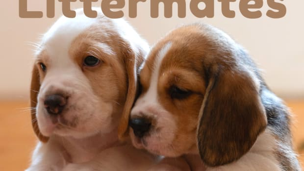 pros-and-cons-of-raising-two-litter-mate-dogs