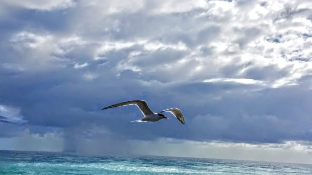 just-a-seagull